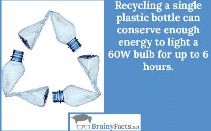 recycling facts essay