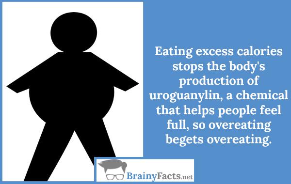 Excess calories
