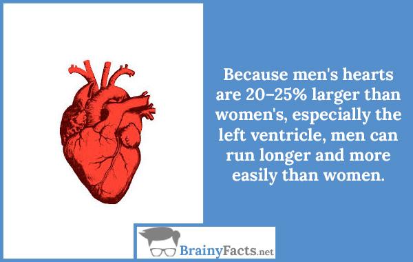 Men's hearts