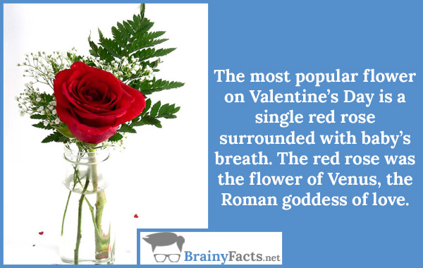 The most popular flower