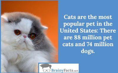 Most popular pet