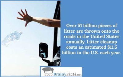 Road Litter