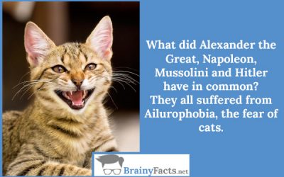 Ailurophobia