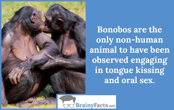 Bonobos..