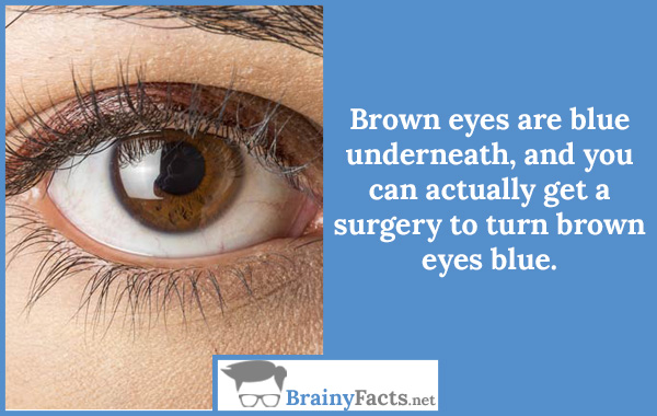 Brown eye is blue
