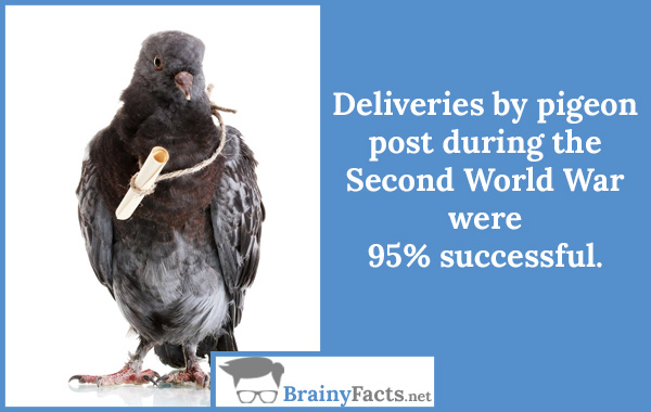 Deliveries by pigeon