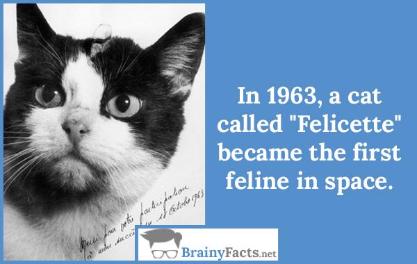 Felicette