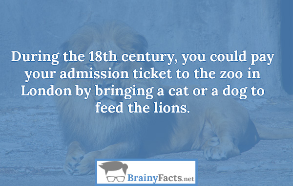 Zoo admission ticket