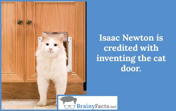 Cat door idea