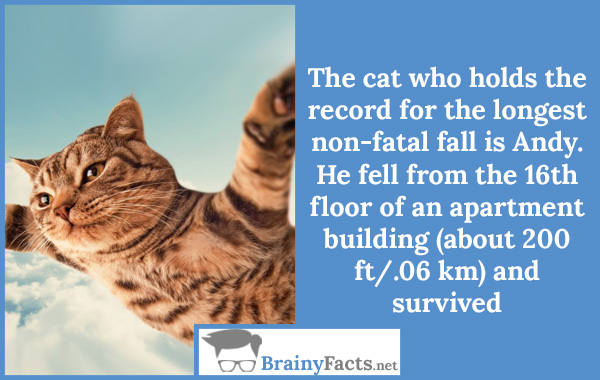 Longest non-fatal fall
