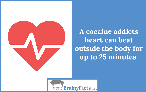 Cocaine addicts