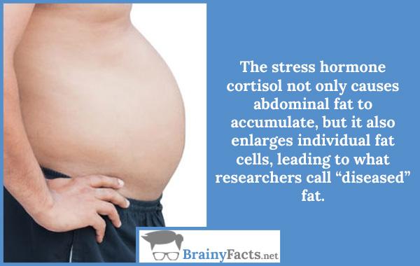 The stress hormone