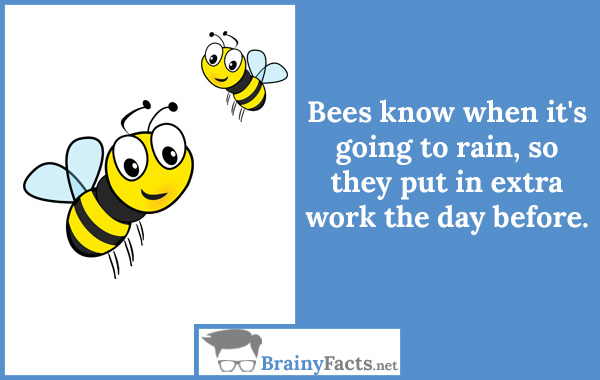 Bees know
