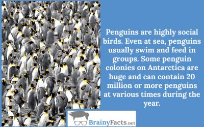 Highly social birds