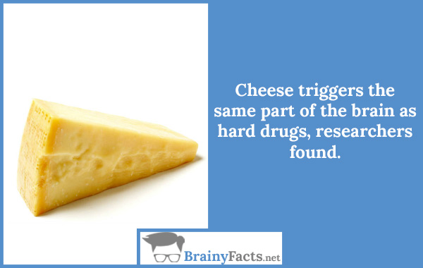 Your Brain On Cheese