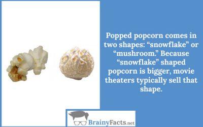Popcorn shapes