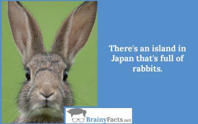 Rabbit Island