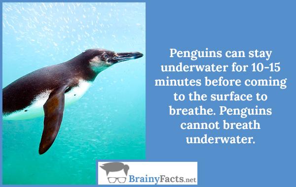 Penguins cannot breathe underwater