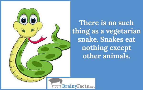 Vegetarian snake