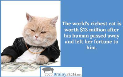 World's richest cat